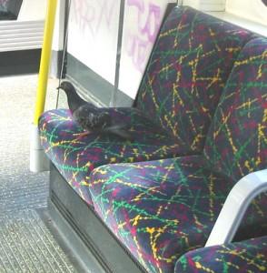 Seat pattern replicates pigeon bowel movement