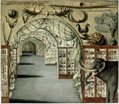 Dutch Natural History Museums