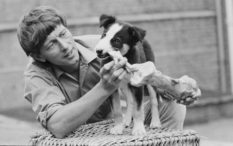 'Blue Peter' presenter John Noakes with the show's new puppy, a border collie named Shep, UK, 14th September 1971.  (Photo by D. Morrison/Express/Hulton Archive/Getty Images)